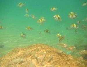 Underwater view..